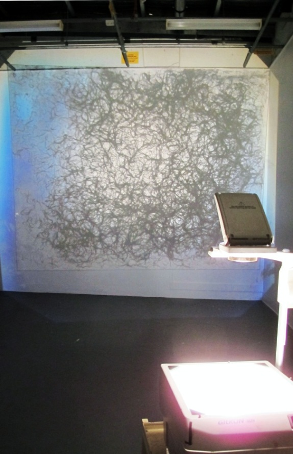 Remnants of Seeds Grown to the Sound of Lectures on 20th Century Art History. 2011. Glass, roots. Description: Roots grown onto glass, illuminated by lightbox and overhead projector.