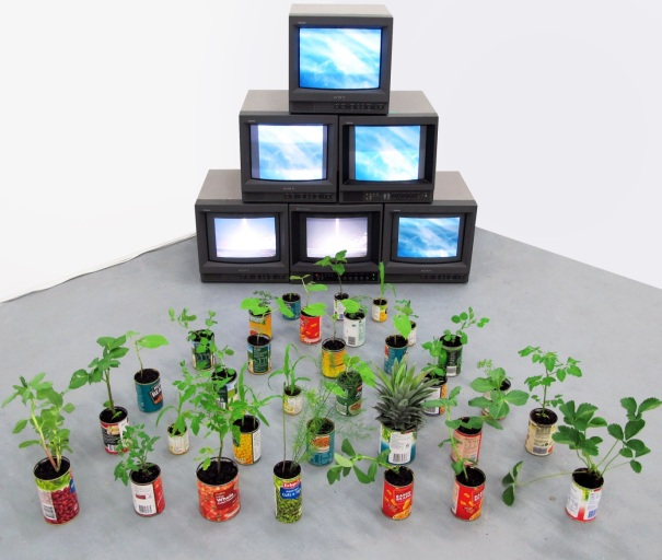 TV/reality. 2011. 6 channel video, tins, plants. Plants growing to alternating videos of the sun and sky. Fruit/vegetable species grown in their corresponding tins.